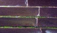 150 bin dekar alanda çeltik ekildi