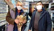 Ereğli'de yaralı şahin tedavi altına alındı