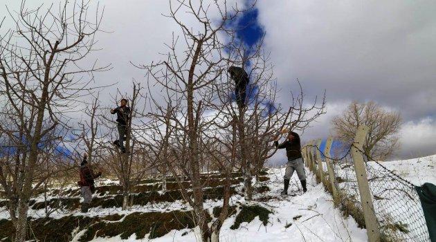 Kiraz bahçeleri kar altında yeni sezona hazırlanıyor