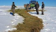 Konya'da yaban hayvanları için kar üzerine yem bırakıldı