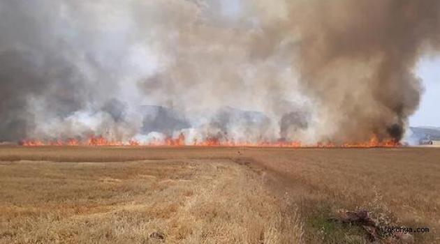 300 Dönümlük Ekili Arazi Küle Döndü