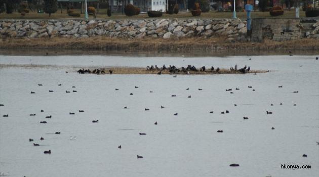 Göllerde su kuşu sayımı yapıldı