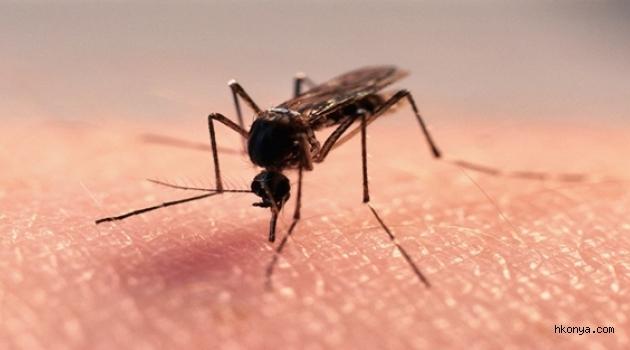 İstanbul'da sivrisinekten gelen büyük tehlike!!