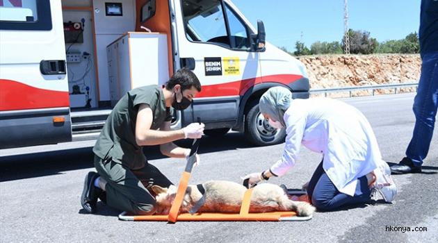 Yaralı sokak hayvanları 'Canbulan' ile hayat buluyor