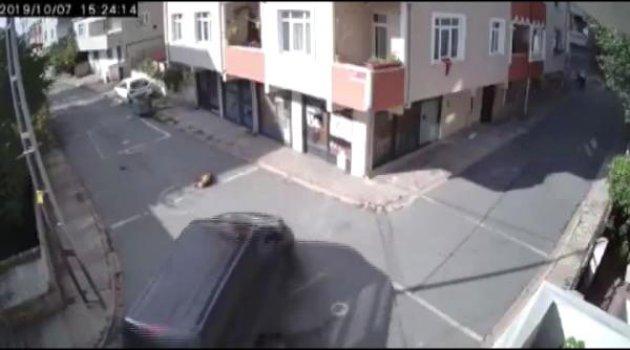 Otomobiliyle köpeği ezdi