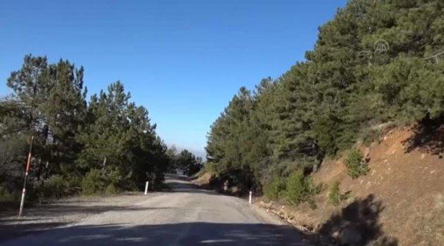 Spil Dağı'nda kardelenler boy gösterdi