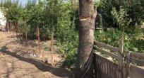 Ağaç kesmeye çalışan vatandaş  yaralandı
