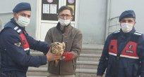 Bozkır'da jandarma ekipleri yaralı kızıl şahine yardım eli uzattı