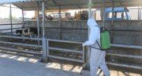 Hayvan pazarı dezenfekte çalışmalarının ardından kapılarını açtı