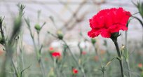 Sektörünün öncü ismi Elif Çiçekçilik